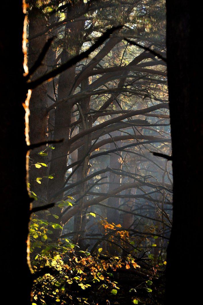 Rūkai miške