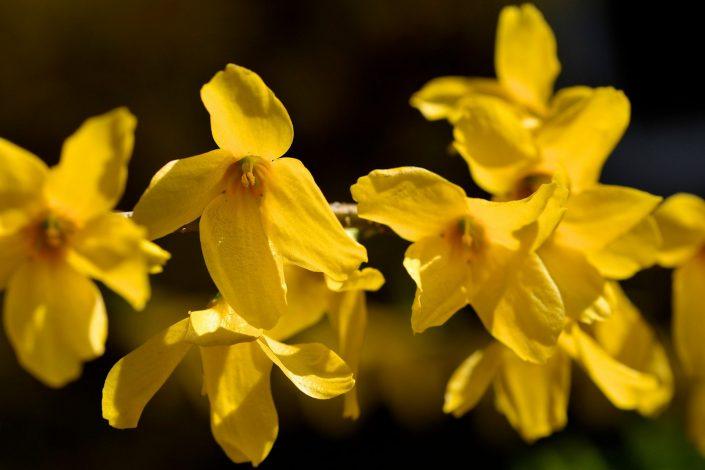 Geltonas medelis