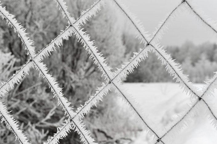 Stingdantis šaltis