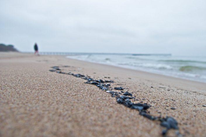 Prie jūros