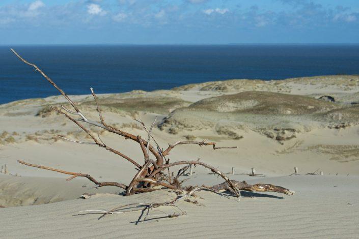 Nidos smėlis